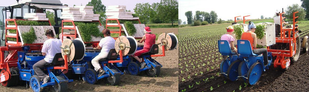 FERRARI: Plantadores mecânicos, semi-automáticos e automáticos para culturas hortícolas